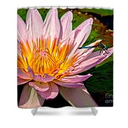 Lily And Dragon Fly Shower Curtain by Nick Zelinsky