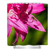 Lily And Fly Shower Curtain