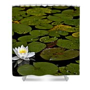 Lily And Pads Shower Curtain