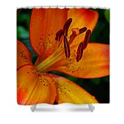 Lily Closeup Shower Curtain