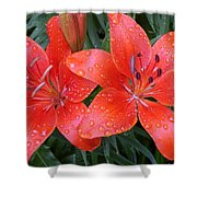 Lily Duet After The Rain Shower Curtain