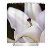 Lily Fair Shower Curtain