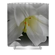 Lily Focal Shower Curtain