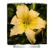 Lily For A Day Shower Curtain
