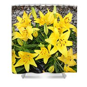 Lily Gathering Shower Curtain