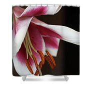Lily II Shower Curtain