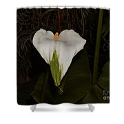 Lily In The Dark Shower Curtain