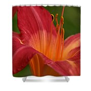 Lily In The Morning Shower Curtain