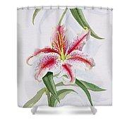 Lily Shower Curtain by Izabella Godlewska de Aranda