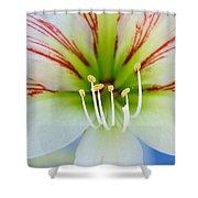 Lily -lilium Shower Curtain