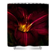 Lily Number Nine Shower Curtain by Bob Orsillo