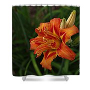 Lily Of Lilies  Shower Curtain