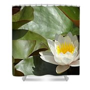 Lily Of Sydney Shower Curtain