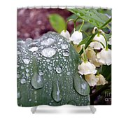 Lily Of The Valley After The Rain Shower Curtain