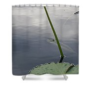 Lily On Stem Shower Curtain