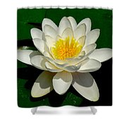 Lily Pad Blossom Shower Curtain