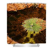 Lily Pad Color Shower Curtain