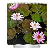 Lily Pad Haven Shower Curtain
