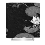 Lily Pad In Bloom Shower Curtain