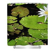Lily Pads And Lotus Flower Shower Curtain