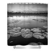 Lily Pads In The Glades Black And White Shower Curtain