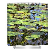 Lily Pads In The Swamp Shower Curtain