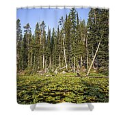 Lily Pads On Isa Lake Shower Curtain