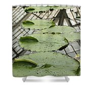 Lily Pads With Reflection Of Conservatory Roof Shower Curtain