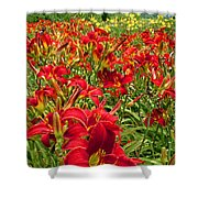 Lily Patch Shower Curtain