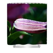 Lily Pearls Shower Curtain