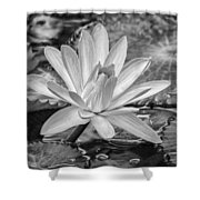 Lily Petals - Bw Shower Curtain