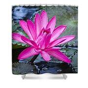 Lily Petals Shower Curtain