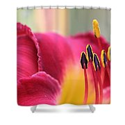 Lily Photo - Flower - Rusty Red Shower Curtain