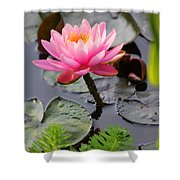 Lily Pink Shower Curtain