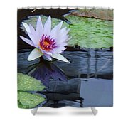 Lily Purple And White Shower Curtain