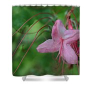 Lily Slide Shower Curtain