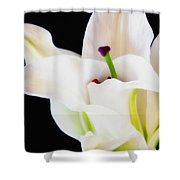 Lily Solitaire Shower Curtain
