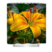 Lily Sunshine Shower Curtain