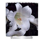 Lily With Rain Droplets Shower Curtain