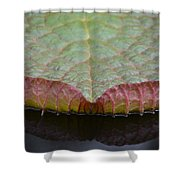 Lilypad Abstract Shower Curtain