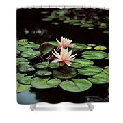 Lilypad And Lotus Shower Curtain