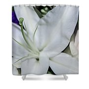 Lilyrose Shower Curtain
