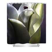 Lily's Eve Shower Curtain