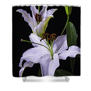 Lily's In Bloom Shower Curtain
