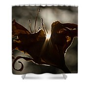 Lily's Light Shower Curtain