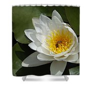 Lily's Sweet Visitor Shower Curtain