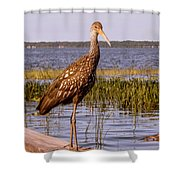 Limpkin Bird Shower Curtain