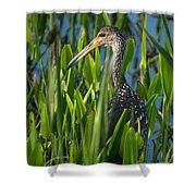 Limpkin Grass Shower Curtain