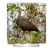 Limpkin In A Tree Shower Curtain