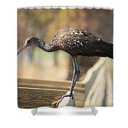 Limpkin On The Boardwalk Shower Curtain